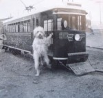 Mystery dog