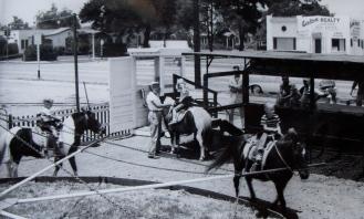 Ernie Ball -ponies 57